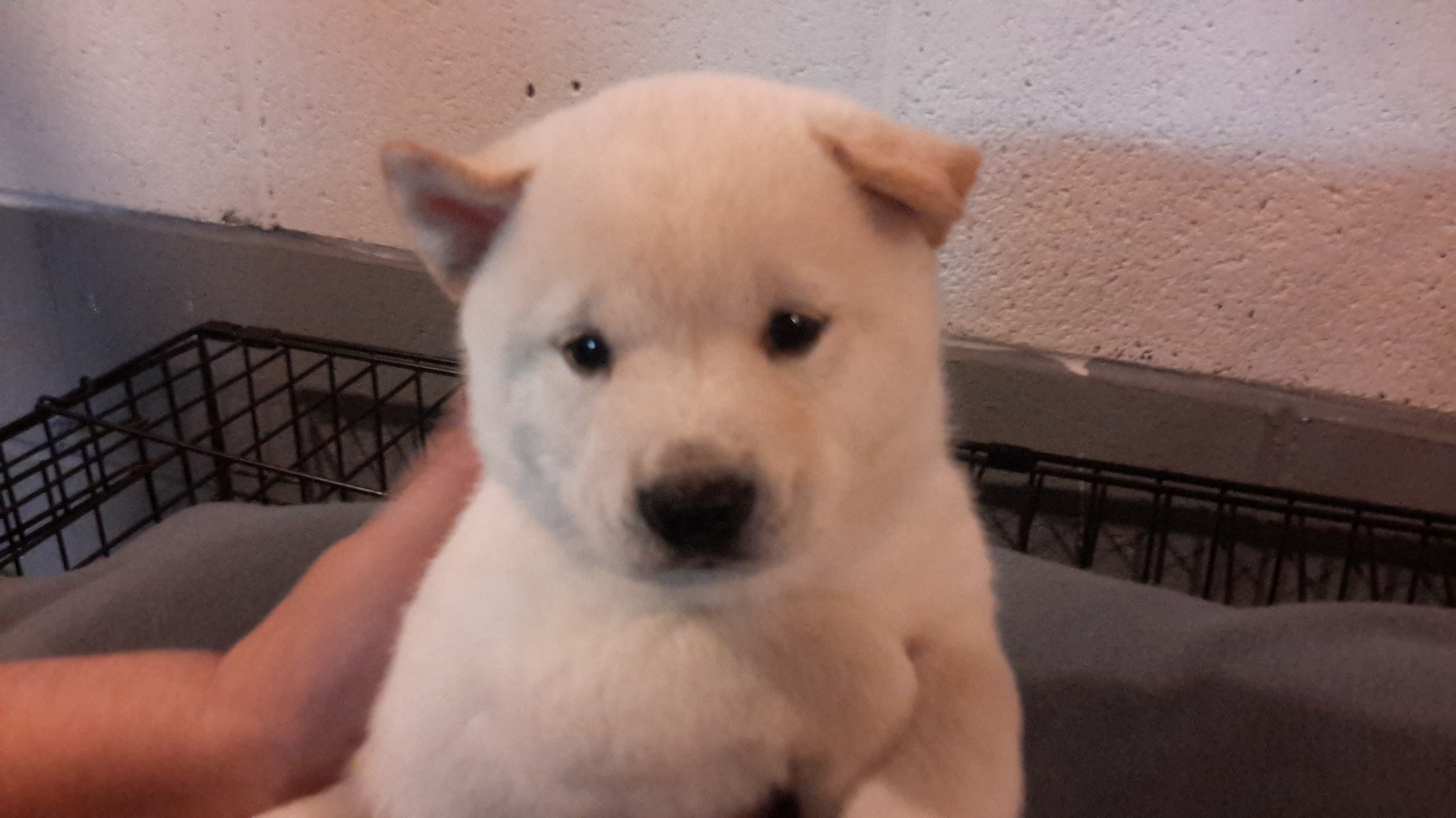 Welcome home my son:  Hachiko.
